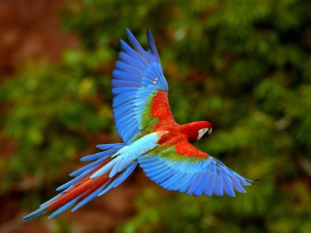 Macaw image courtesy of www.wallpaperwala.com